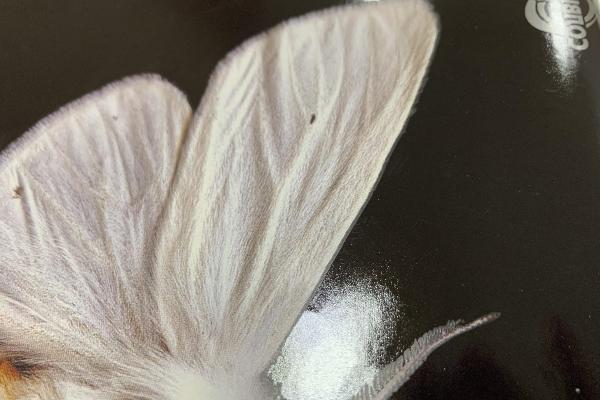 УФ-лаки со спецэффектами: подборка от российских поставщиков [Текстурные и рельефные эффекты]